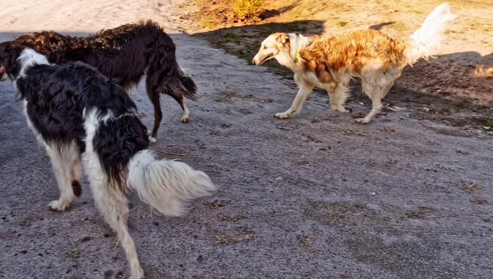 Dogs-in-Dereel-33.jpeg
