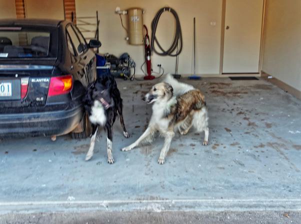Dogs-in-Dereel-46.jpeg