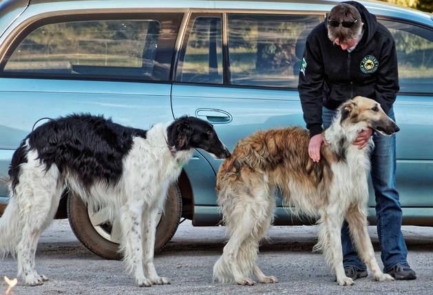 Dogs-in-Dereel-53.jpeg