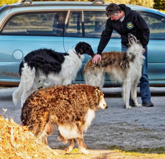 Dogs-in-Dereel-54.jpeg
