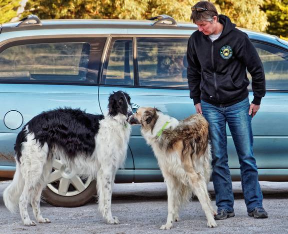 Dogs-in-Dereel-56.jpeg