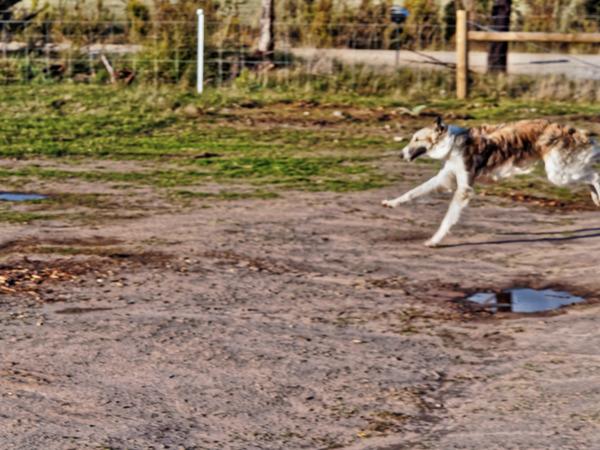 Dogs-in-Dereel-64.jpeg