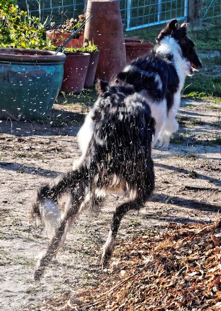 Dogs-in-Dereel-66.jpeg