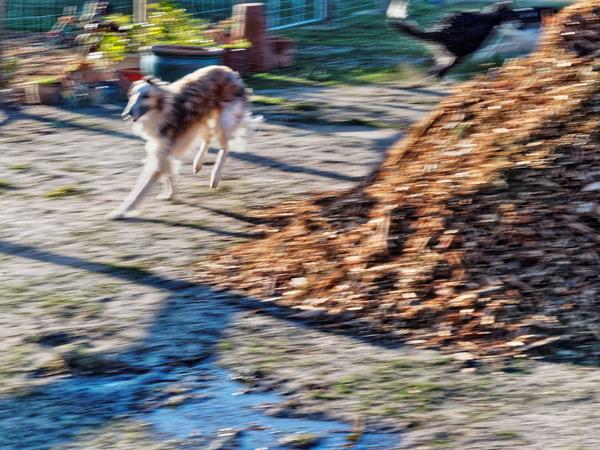 Dogs-in-Dereel-67.jpeg
