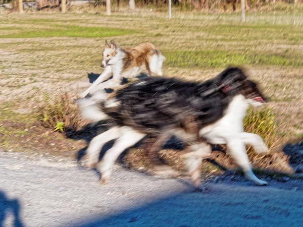 Dogs-in-Dereel-68.jpeg