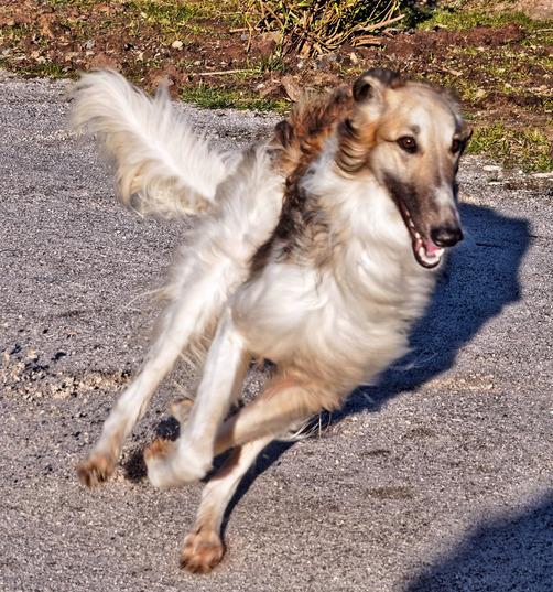 Dogs-in-Dereel-69.jpeg