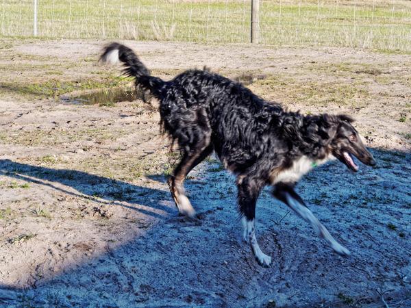 Dogs-in-Dereel-70.jpeg