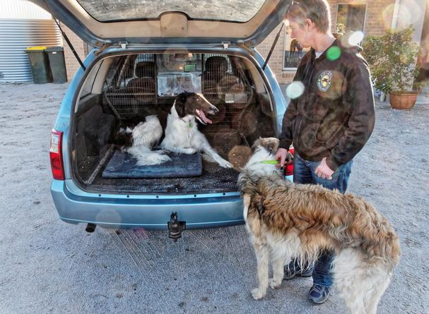 Dogs-in-Dereel-74.jpeg