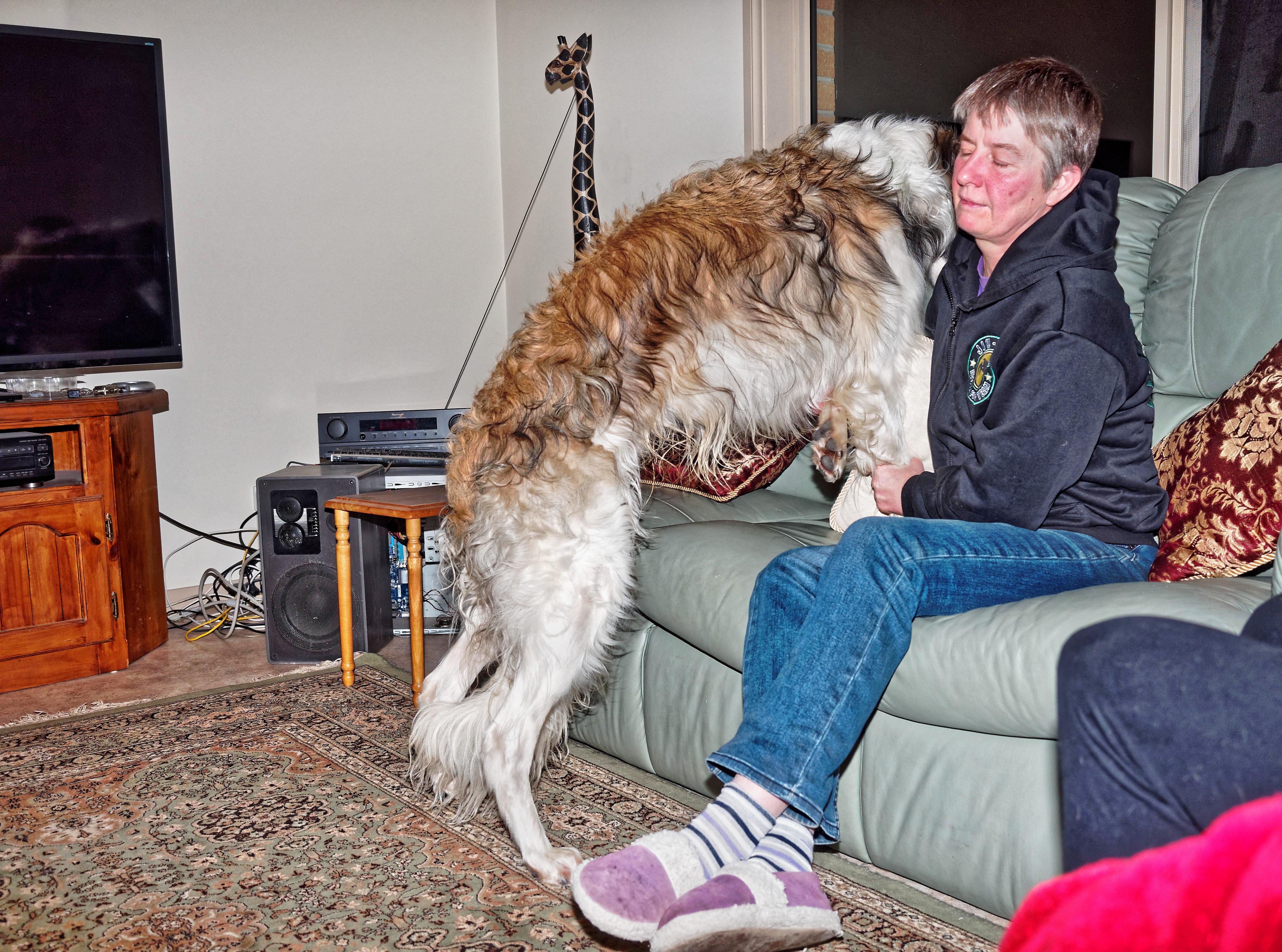 Dogs-34.jpeg