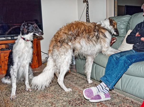 Dogs-33.jpeg