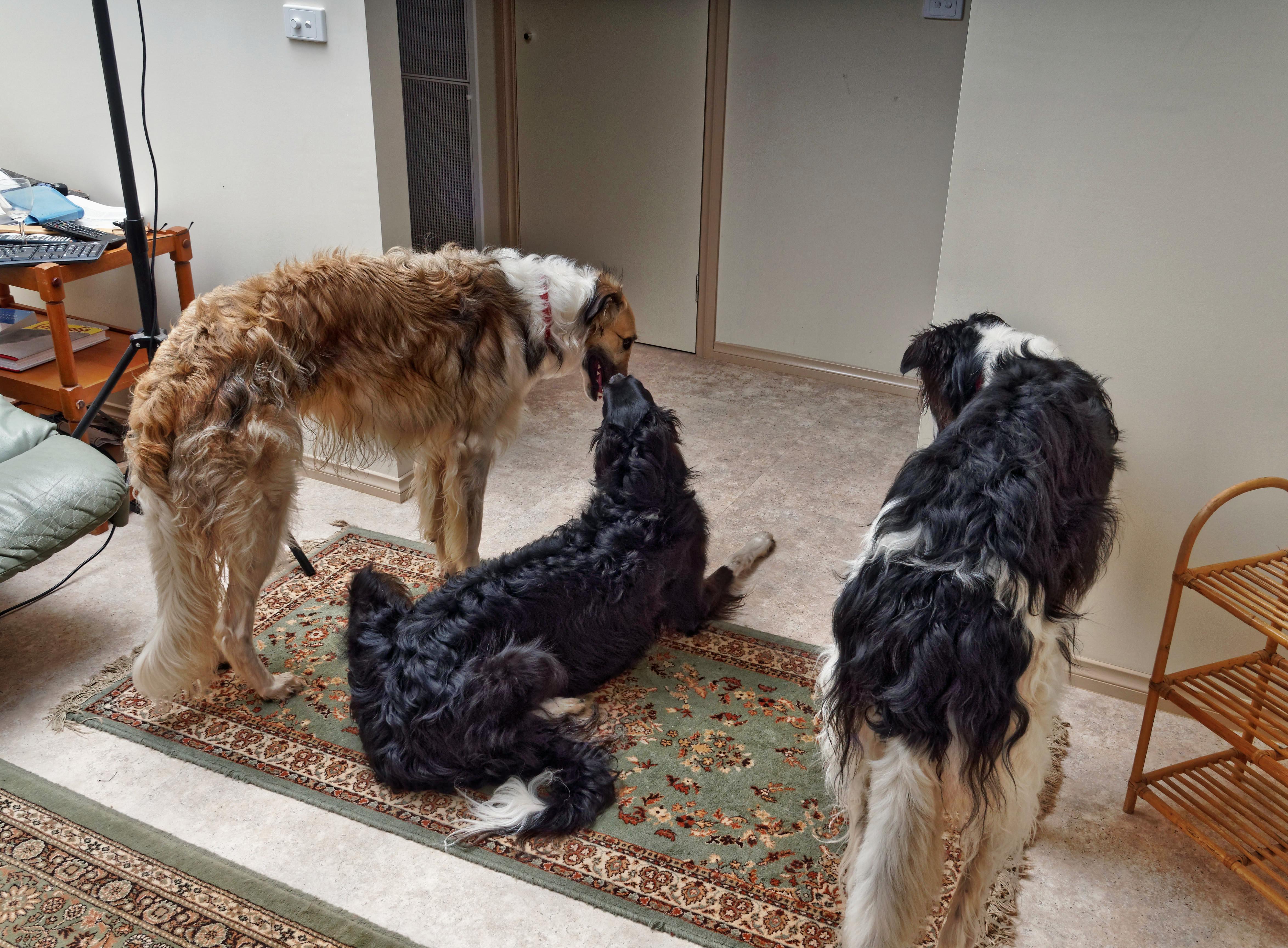 Dogs-66.jpeg