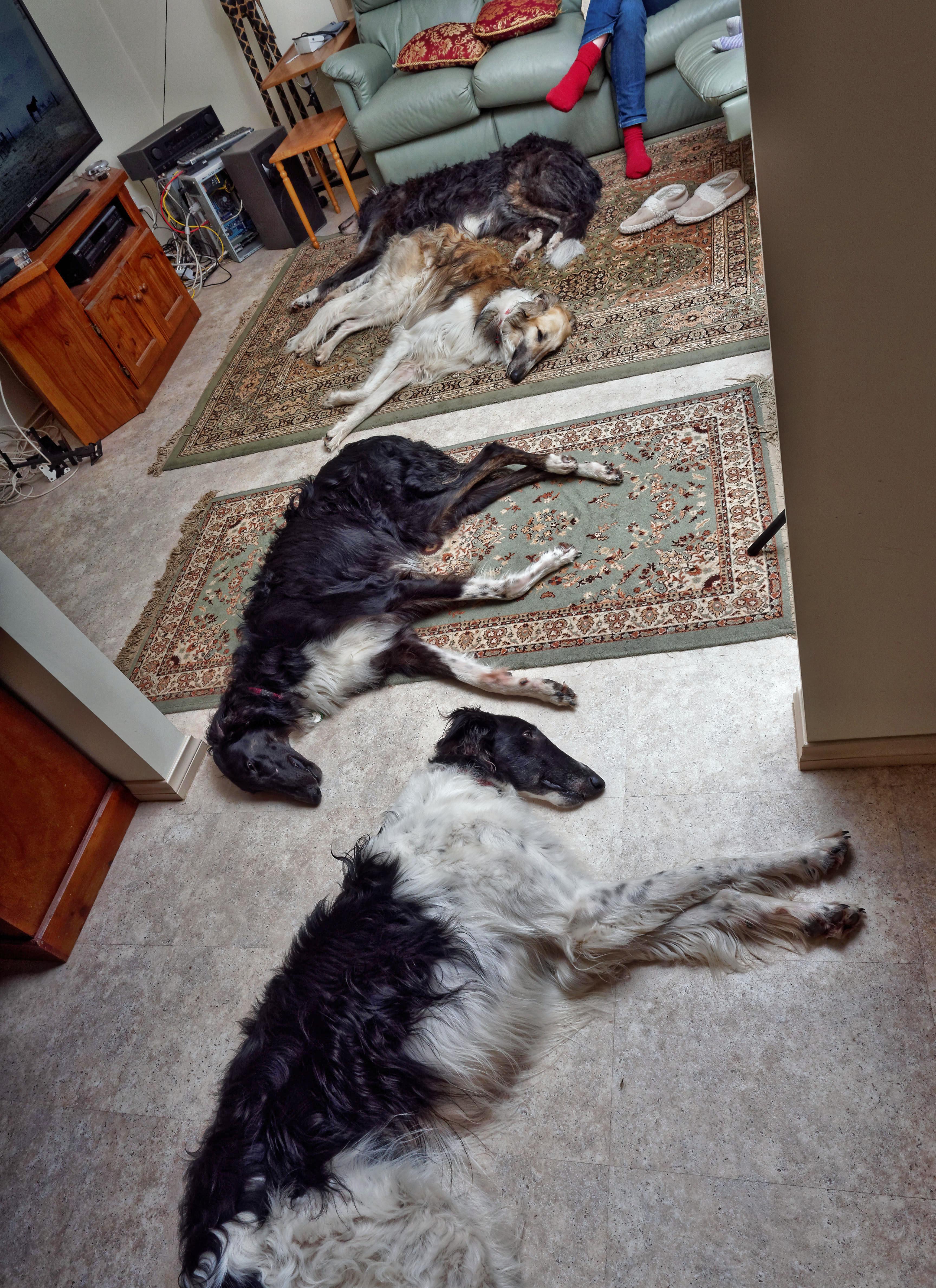 Dogs-70.jpeg