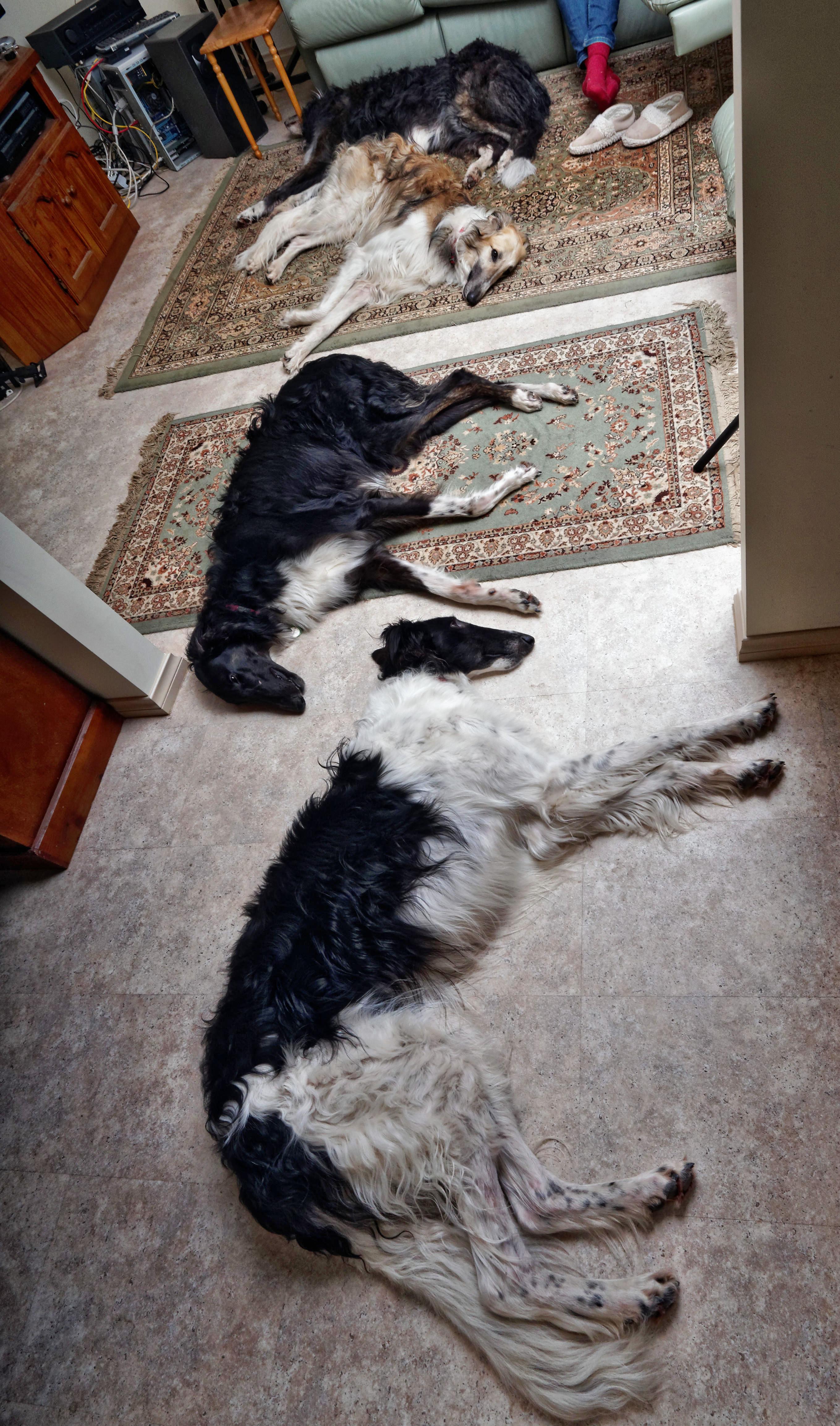 Dogs-72.jpeg