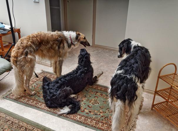 Dogs-67.jpeg