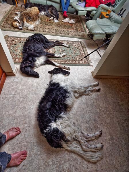 Dogs-75.jpeg