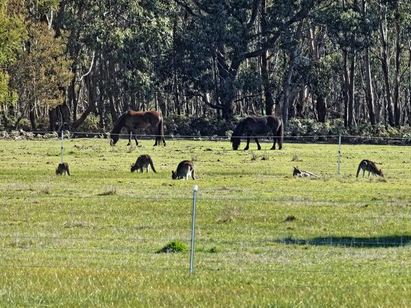 Horses-kangaroos-2.jpeg