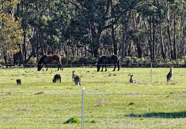 Horses-kangaroos-3.jpeg