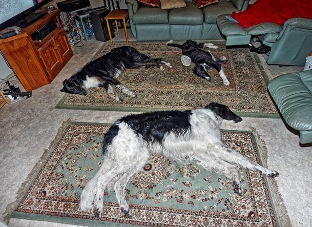 Dogs-1.jpeg