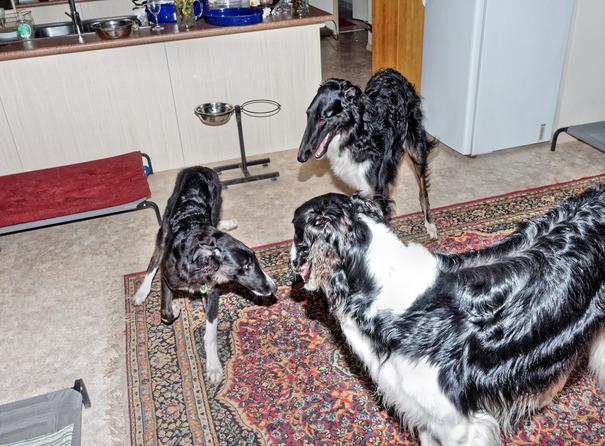Dogs-playing-18.jpeg
