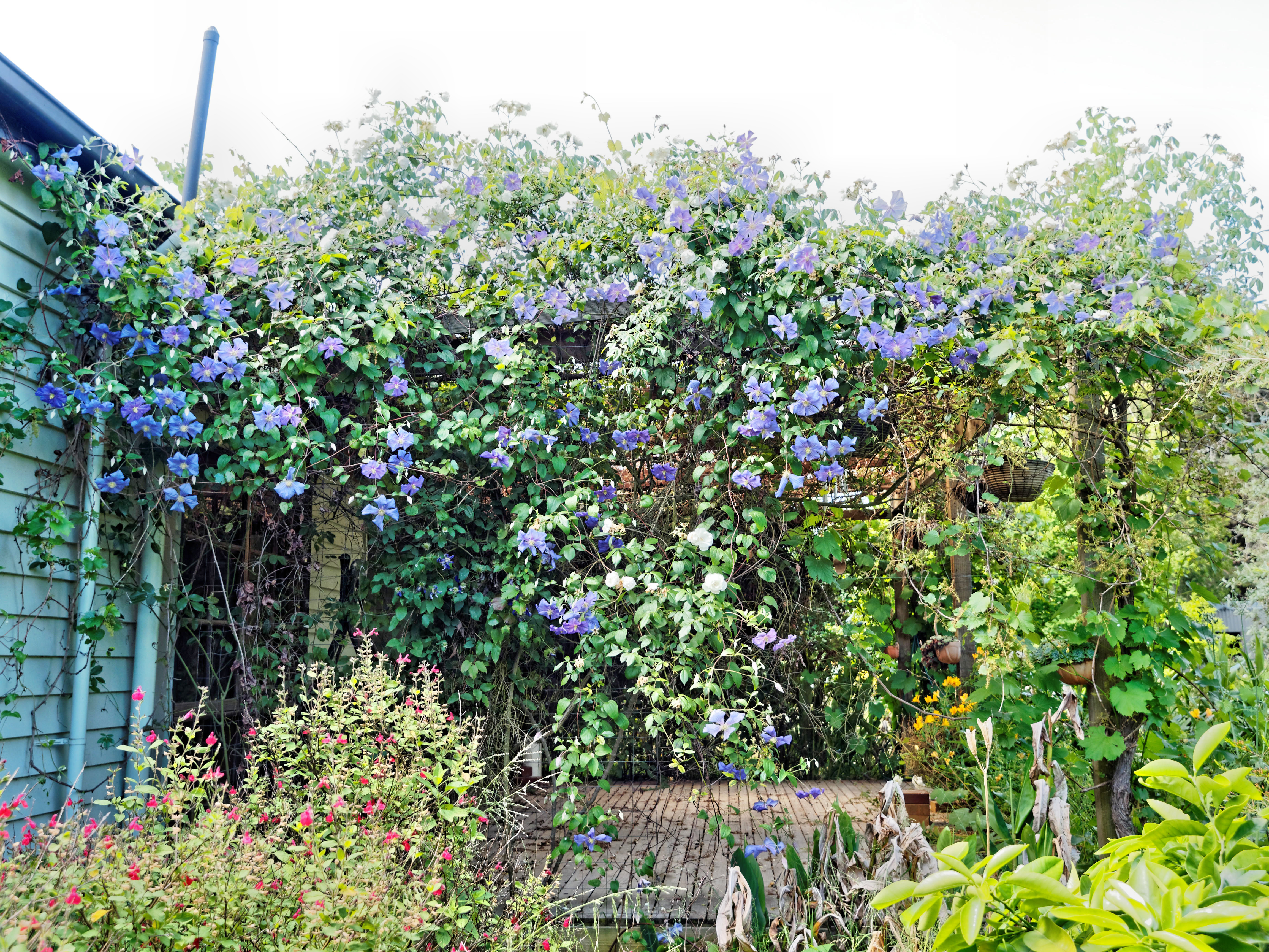 This should be Rose-Clematis.jpeg.  Is it missing?