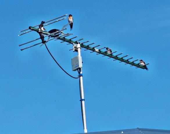 Birds-on-antenna.jpeg