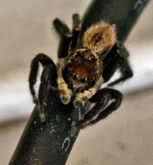 Spider-2-detail.jpeg
