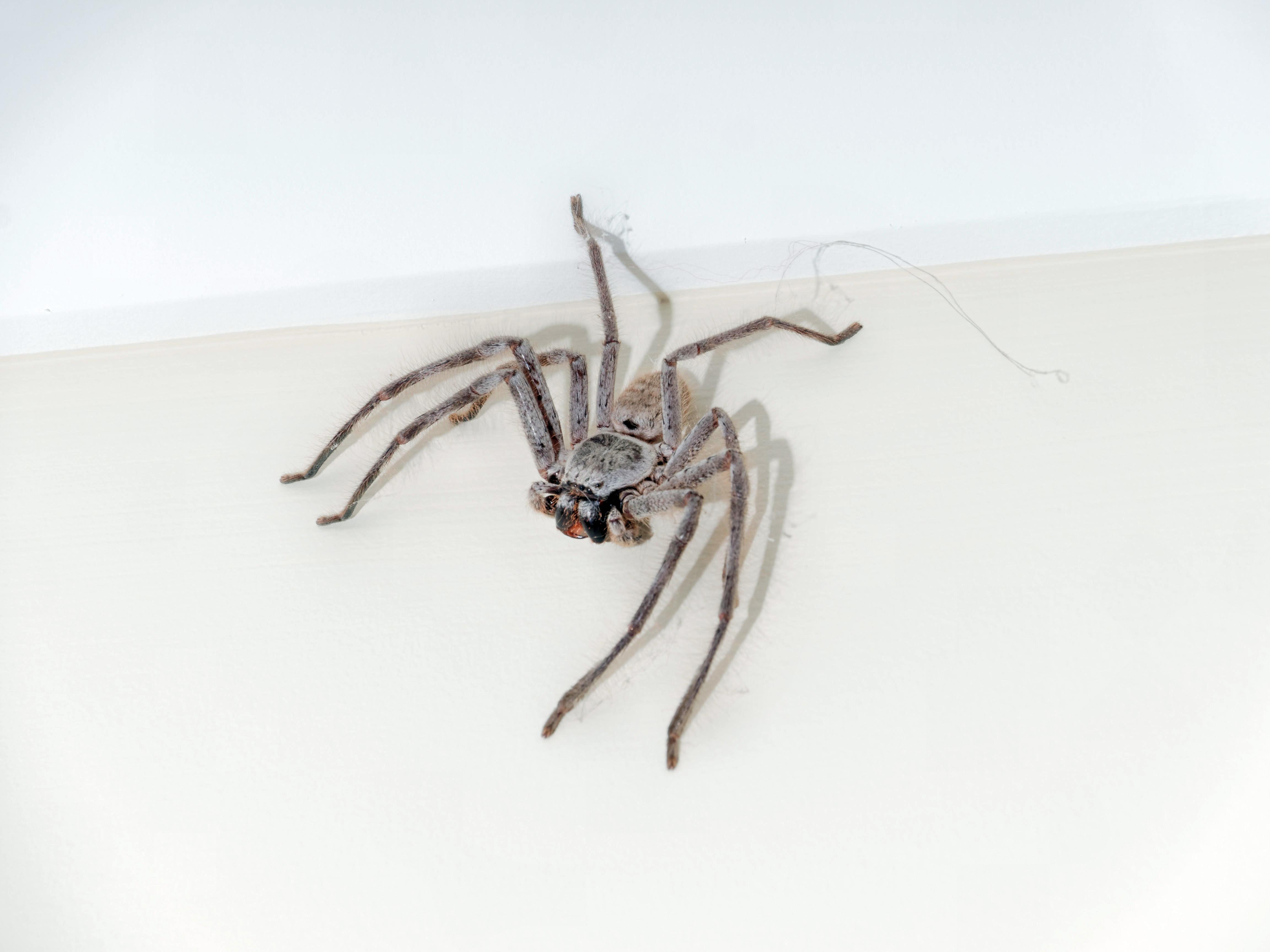 Spider-1.jpeg