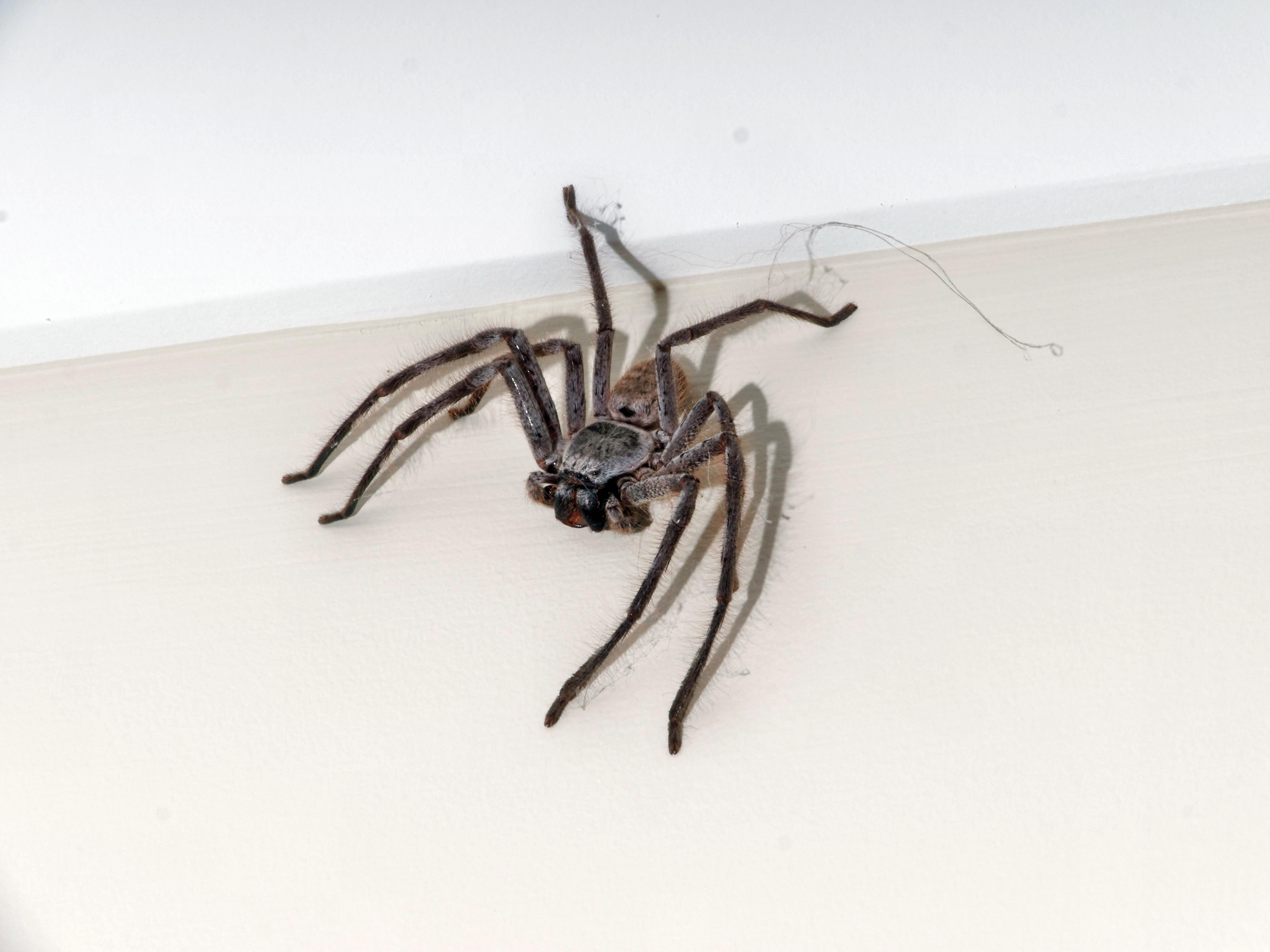 Spider-2.jpeg