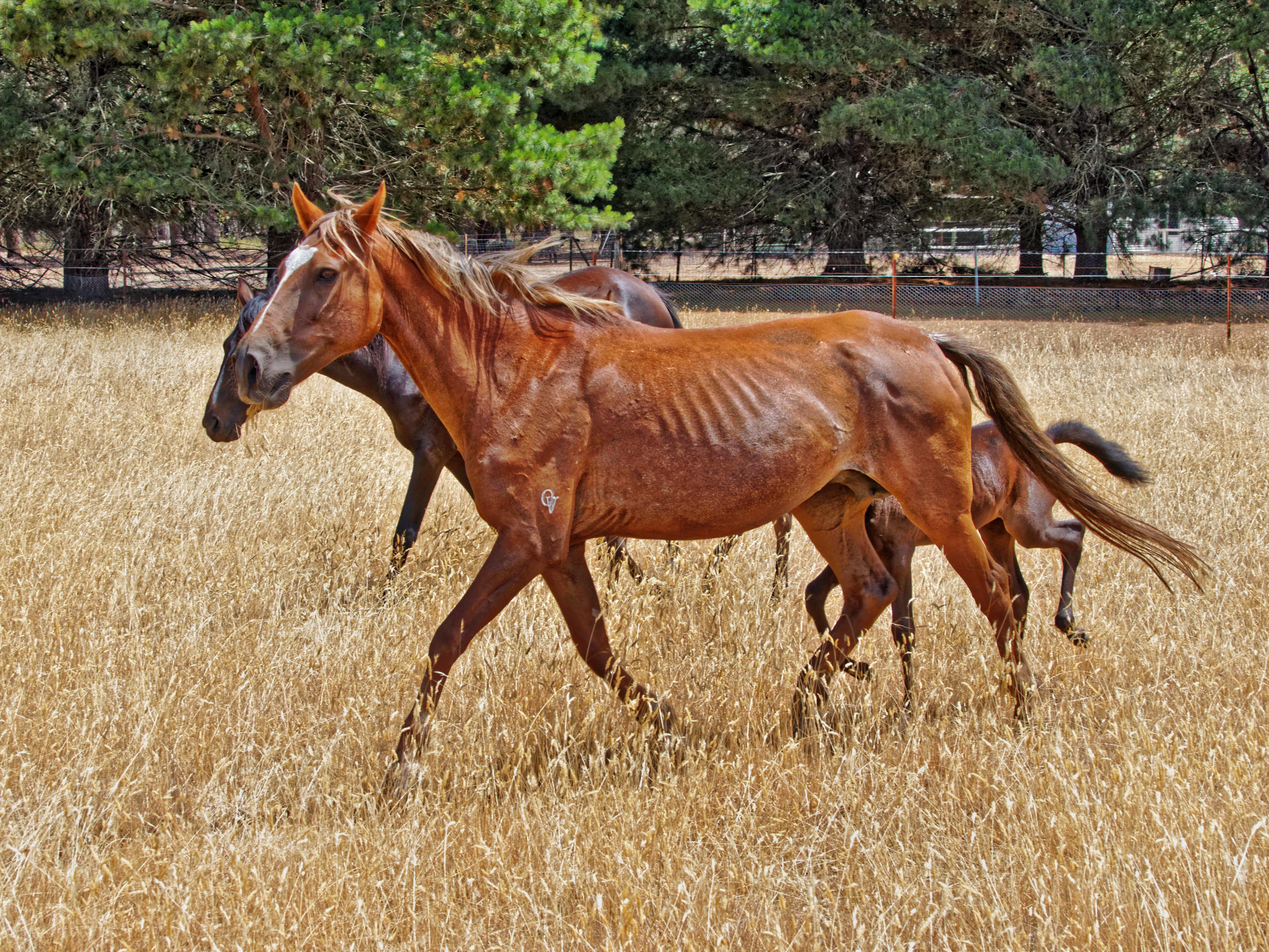 New-horses-17.jpeg