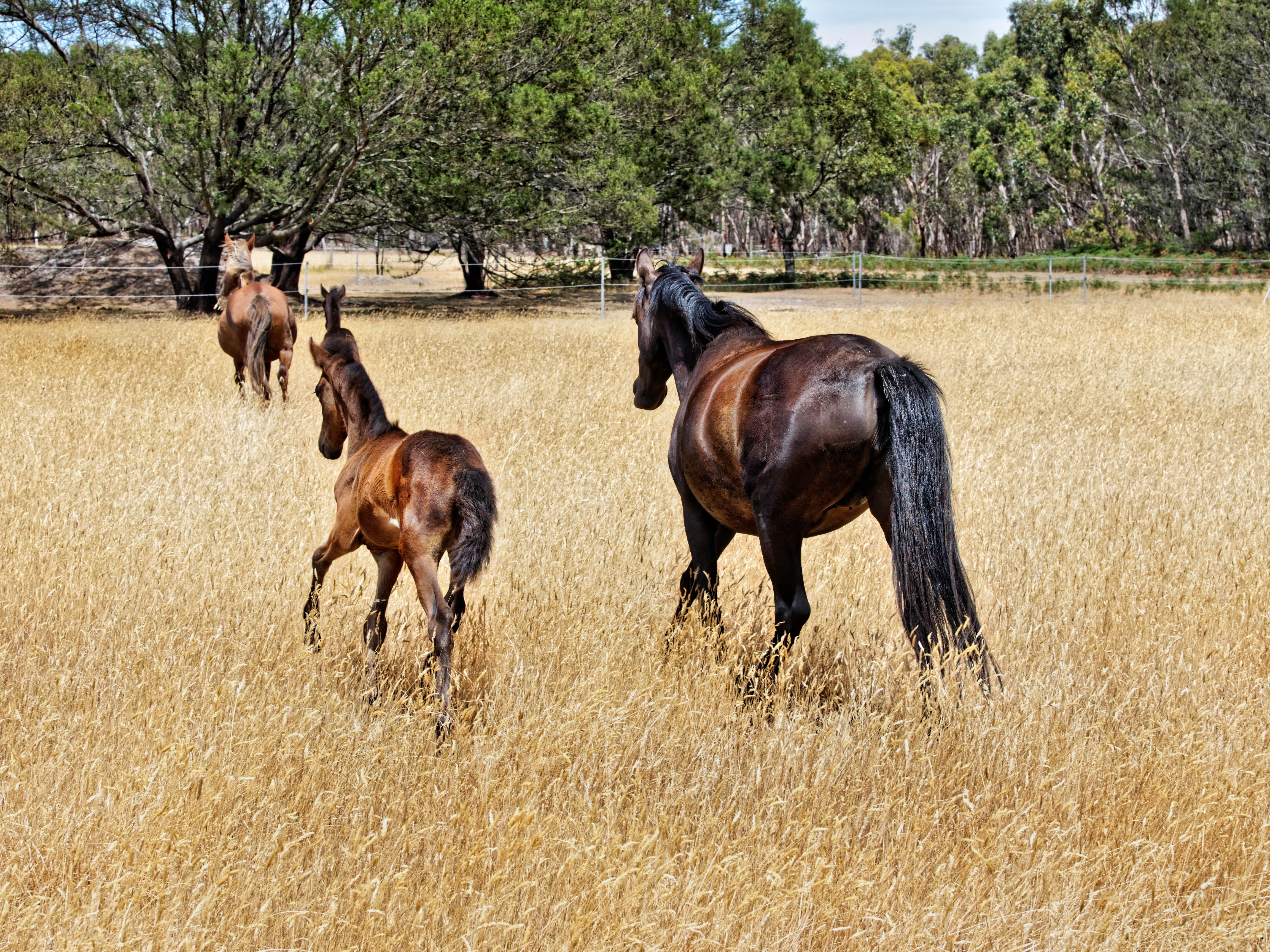 New-horses-19.jpeg