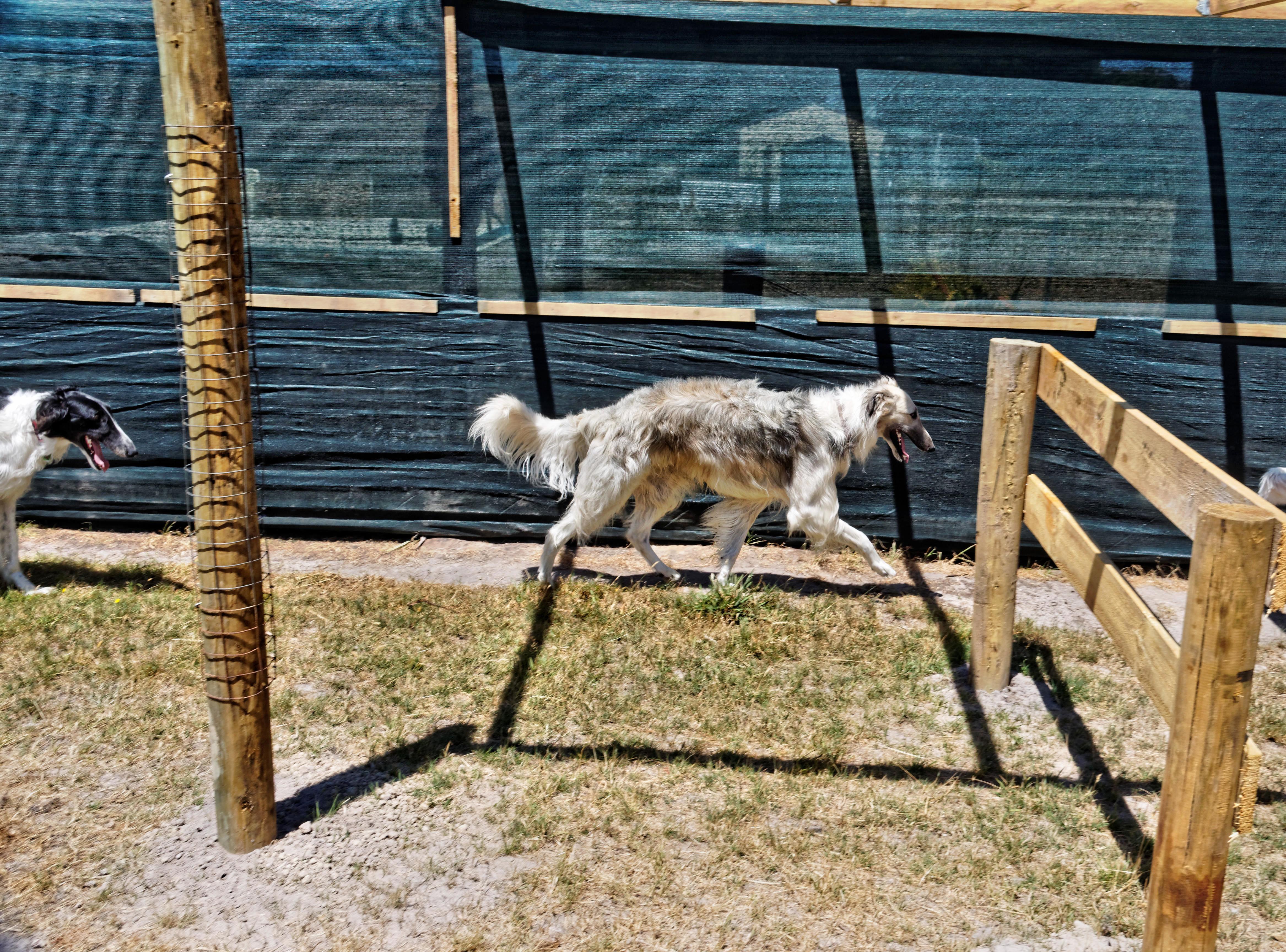Dogs-21.jpeg