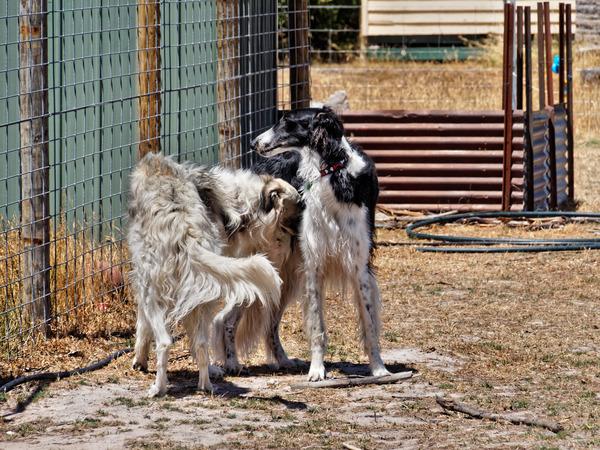 Dogs-15.jpeg