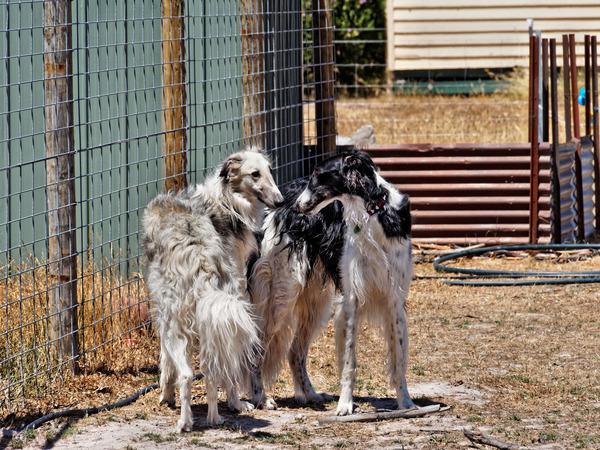 Dogs-16.jpeg