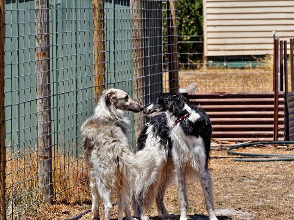 Dogs-17.jpeg