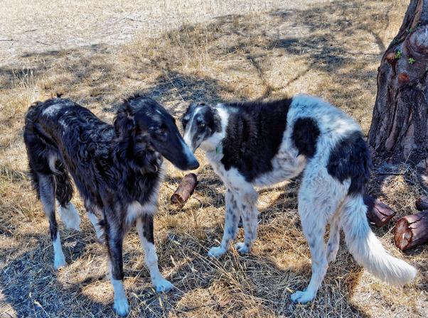 Dogs-25.jpeg