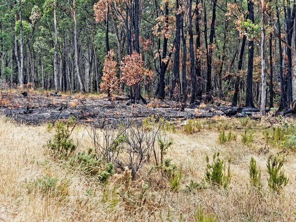 Bushfire-remains-2.jpeg