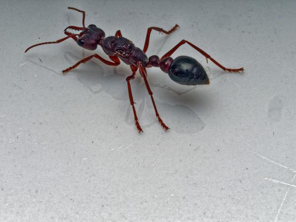 Ant-3.jpeg