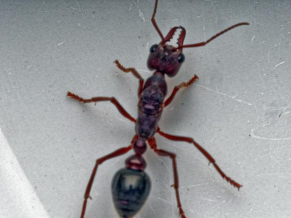 Ant-4.jpeg