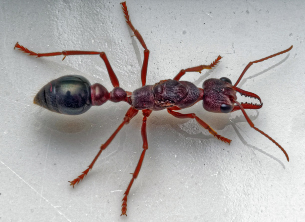 Ant-5.jpeg