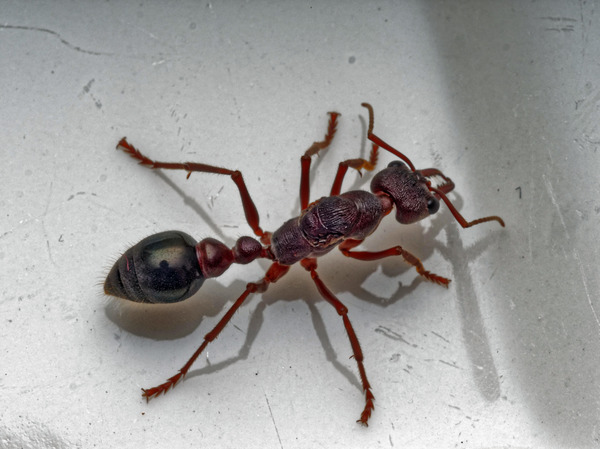 Ant-8.jpeg