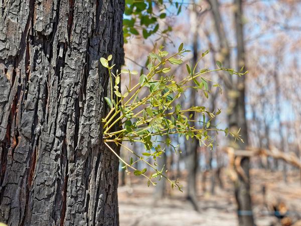 Bushfire-4.jpeg