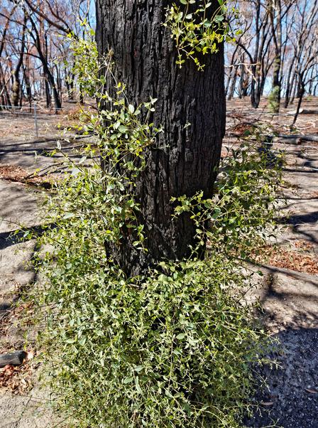 Bushfire-6.jpeg