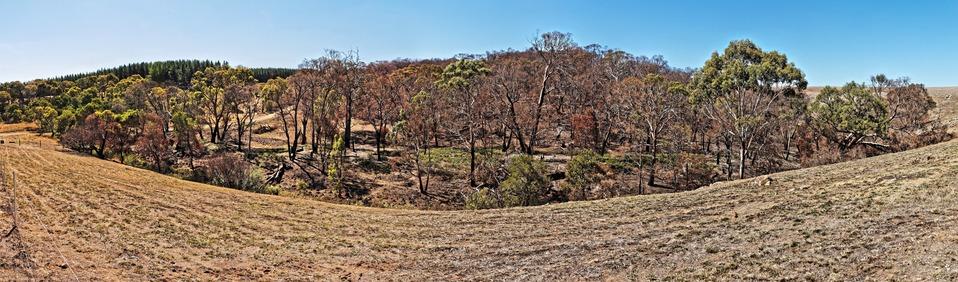 Bushfire-pano-2.jpeg