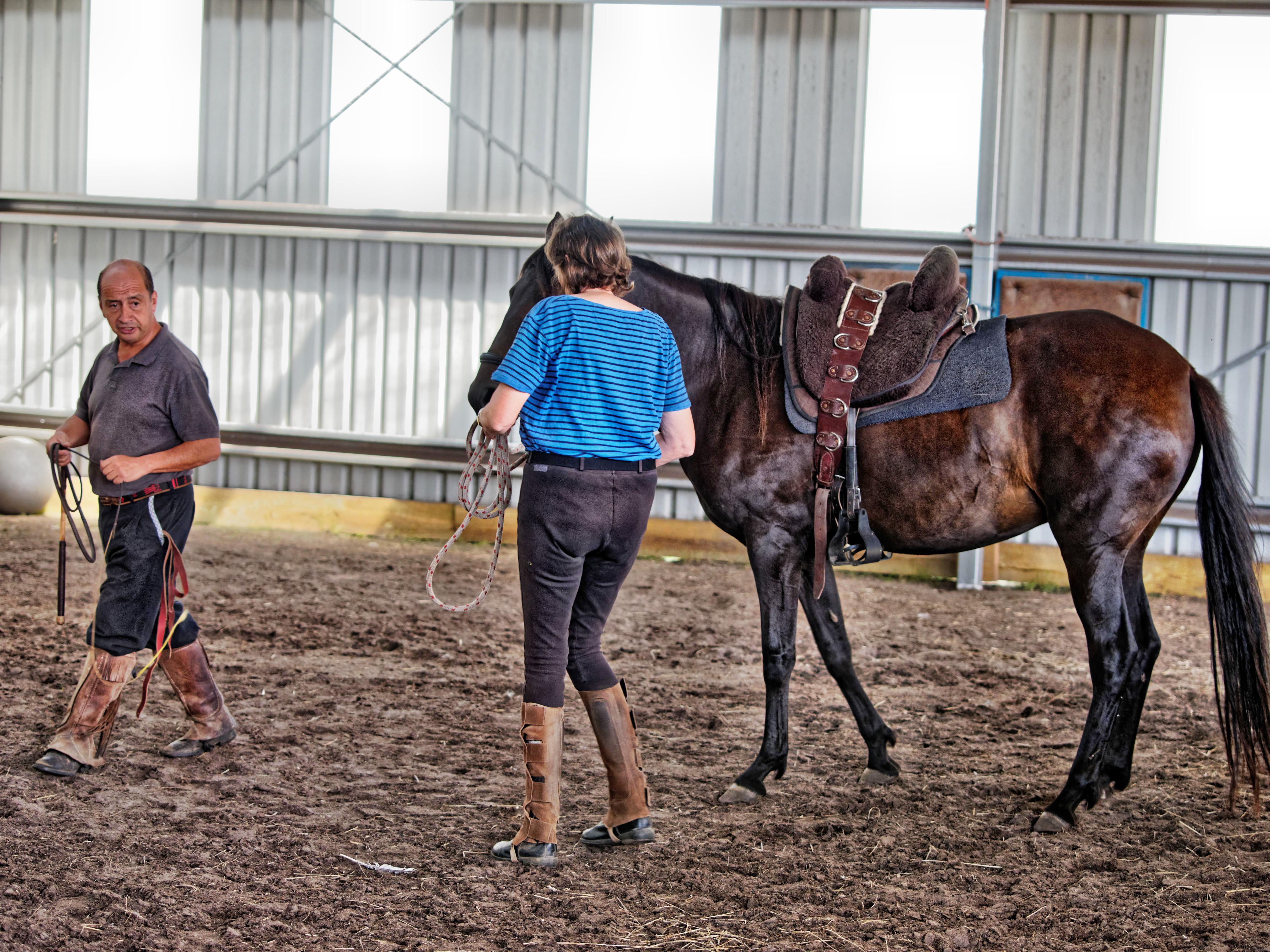 Horse-training-11.jpeg