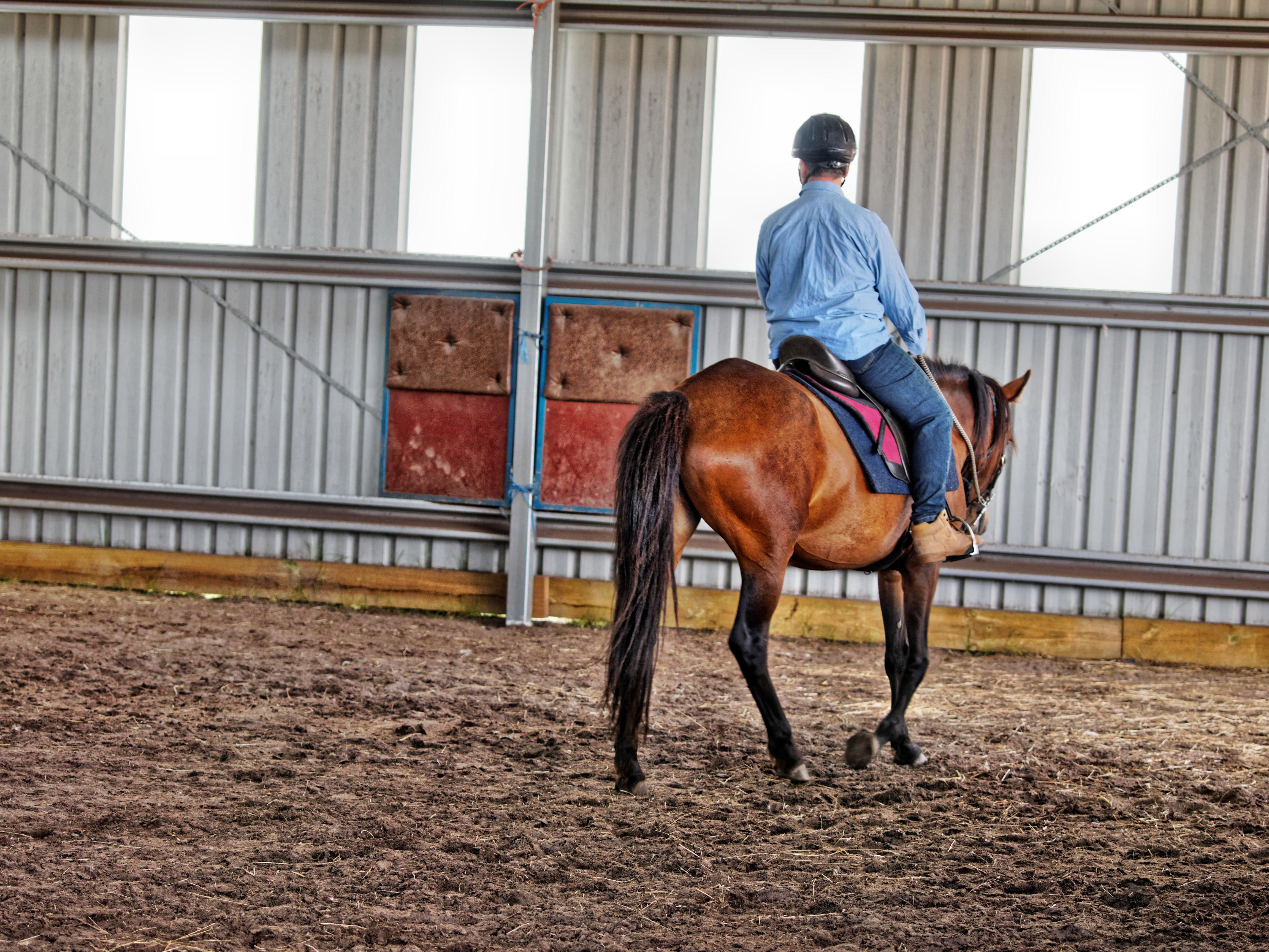 Horse-training-13.jpeg