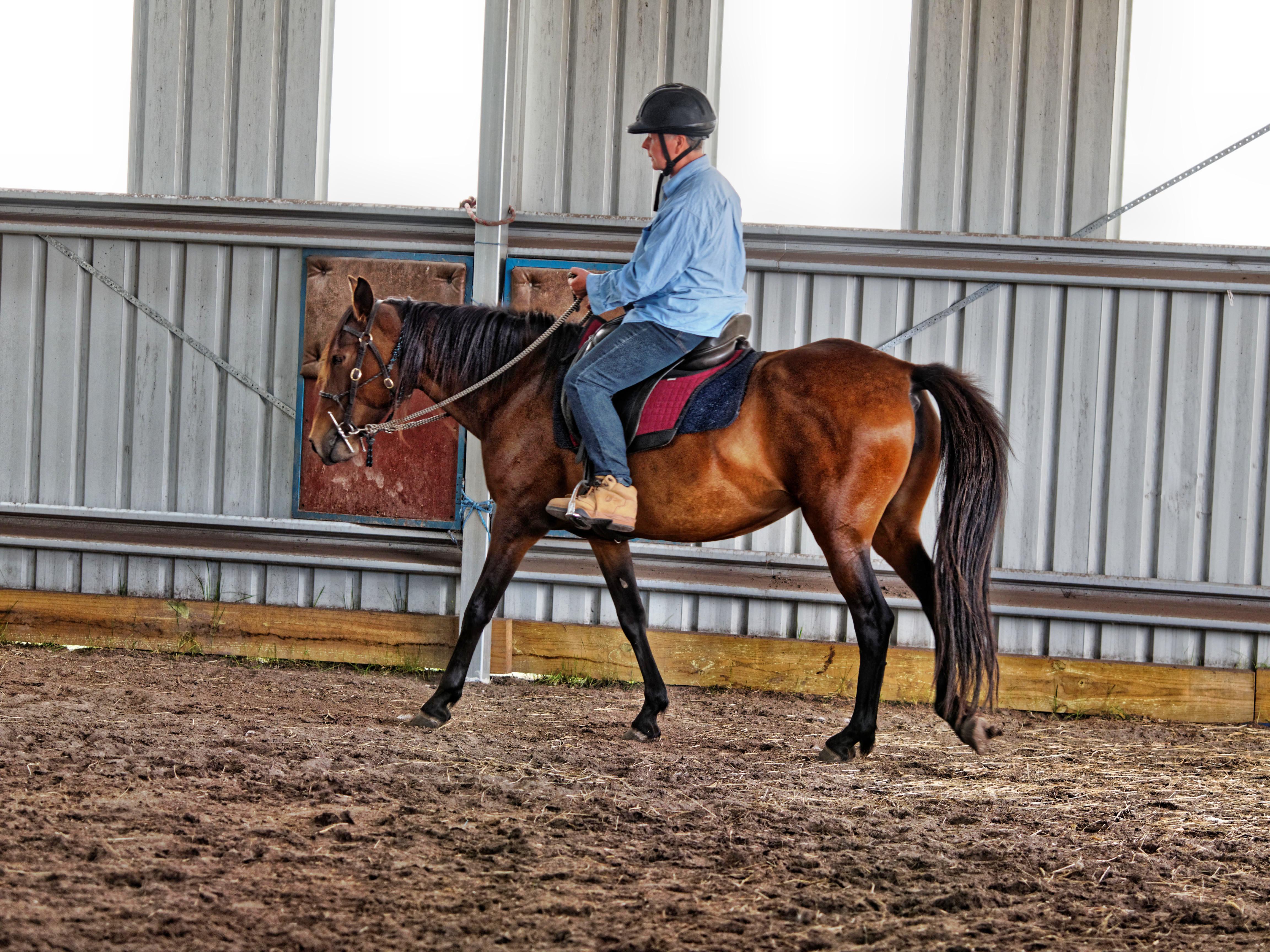 Horse-training-14.jpeg