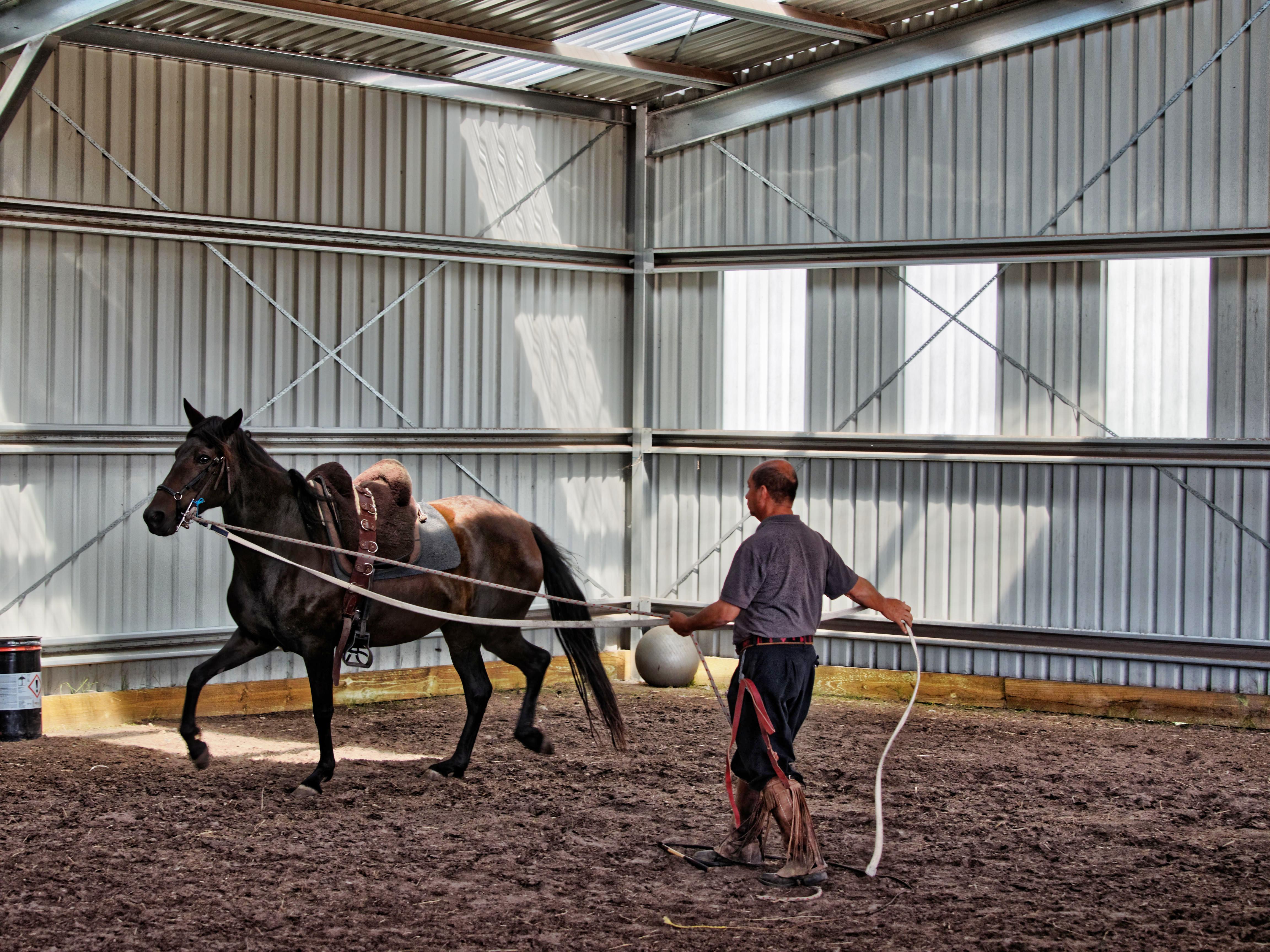 Horse-training-6.jpeg