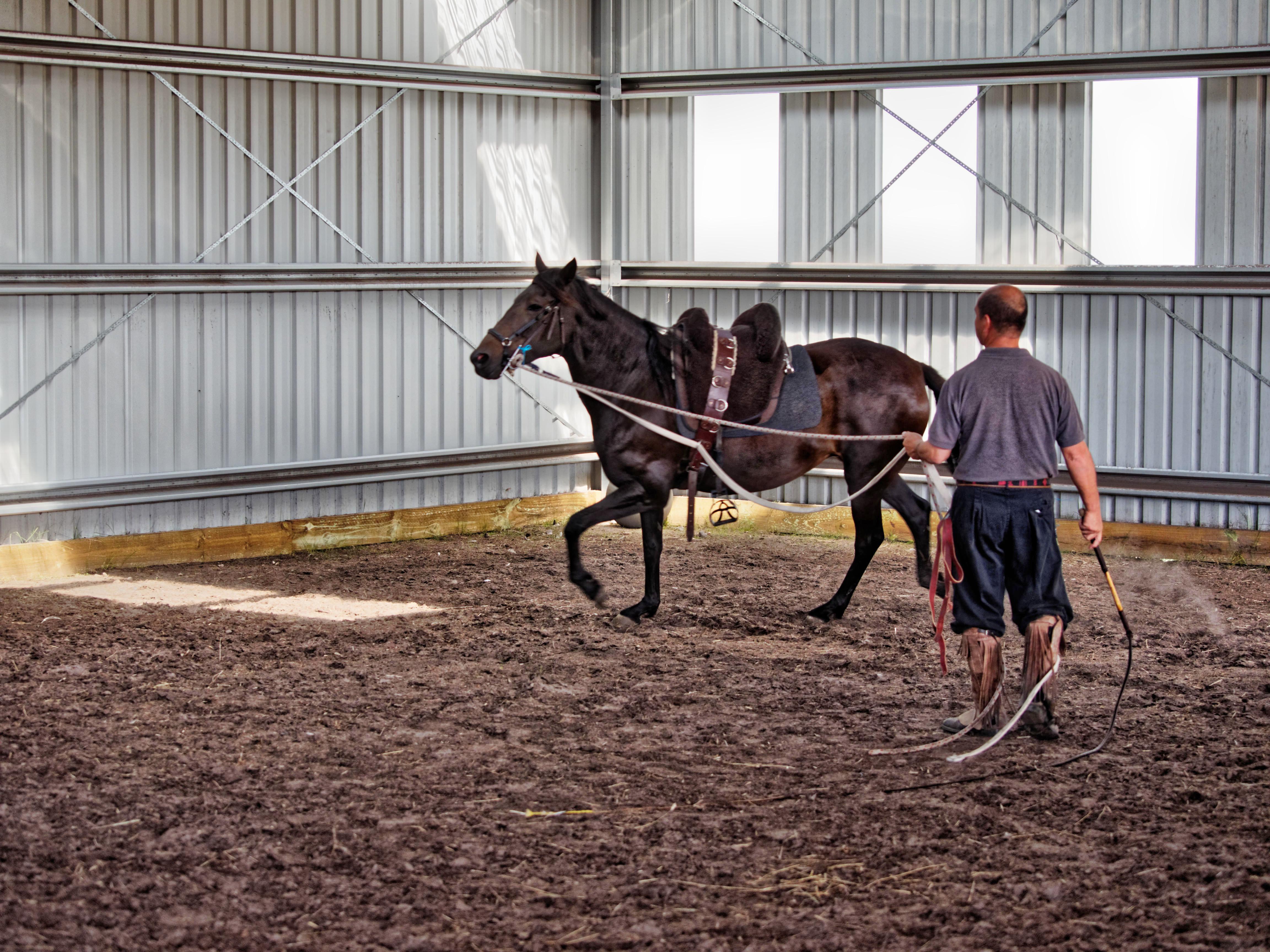 Horse-training-7.jpeg