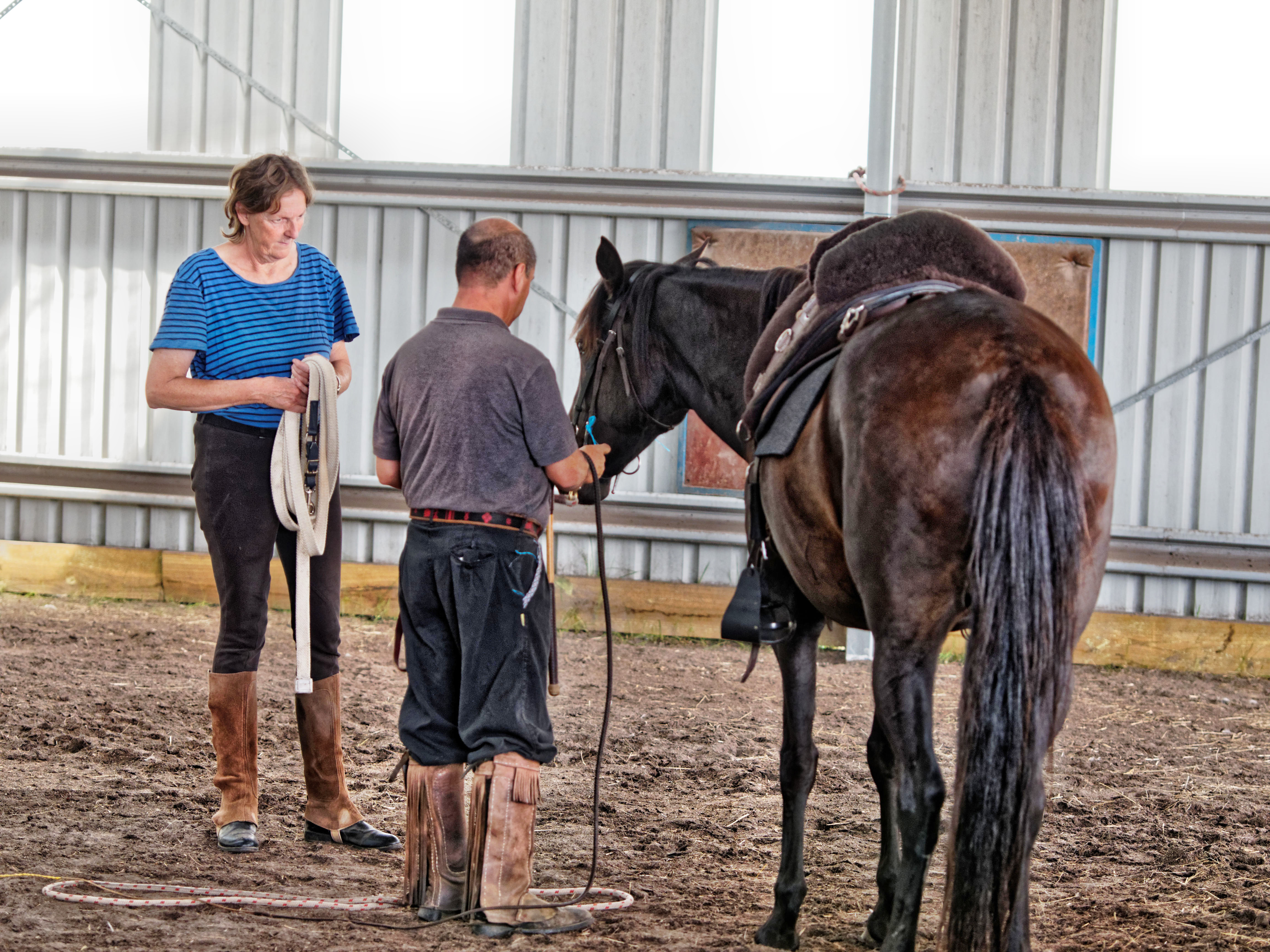 Horse-training-9.jpeg