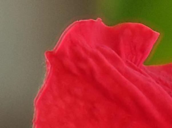 Hibiscus-8-detail-1.jpeg